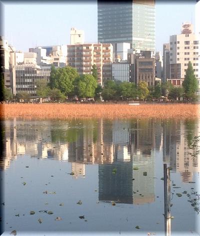 shinobazunoike-S.jpg